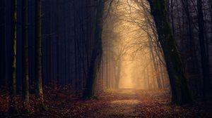 Preview wallpaper park, autumn, trees