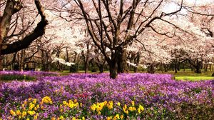 Preview wallpaper park, flowerbed, flowers, summer, trees