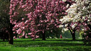 Preview wallpaper park, flowering, trees, grass
