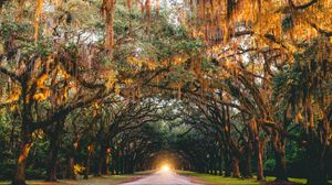 Preview wallpaper park, trees, arch, light, road, savannah, united states