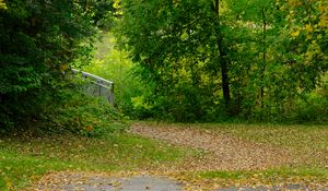 Preview wallpaper park, trees, fallen leaves, autumn, landscape