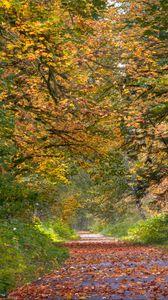 Preview wallpaper park, trees, path, fallen leaves, autumn, landscape