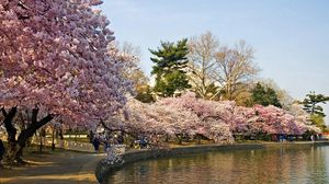 Preview wallpaper park, trees, spring, pond