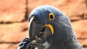 Preview wallpaper parrot, beak, bird