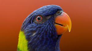 Preview wallpaper parrot, bird, beak, wildlife, exotic