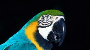 Preview wallpaper parrot, bird, beak, color
