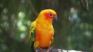 Preview wallpaper parrot, bird, branch, color