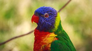 Preview wallpaper parrot, bird, colorful