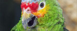 Preview wallpaper parrot, bird, feathers, beak, green