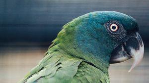 Preview wallpaper parrot, bird, green, blue