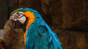 Preview wallpaper parrot, macaw, bird, blue