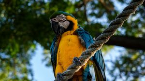 Preview wallpaper parrot, macaw, bird, rope, sits