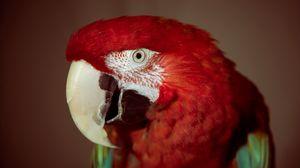 Preview wallpaper parrot, red, red parrot, beak