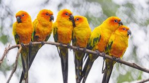 Preview wallpaper parrots, birds, branch, bright