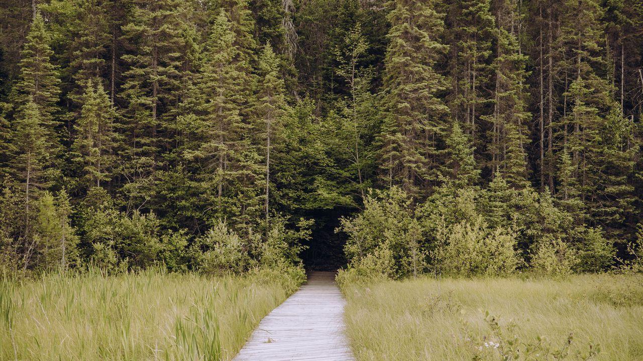 【壁纸桌面】墙纸小路,草,树,云杉高清壁纸免费下载