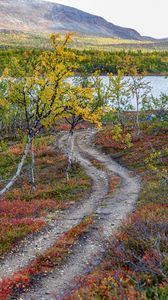 Preview wallpaper path, trees, lake, mountain, landscape