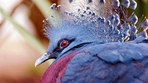 Preview wallpaper peacock, head, beautiful, bird