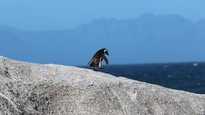 Preview wallpaper penguin, bird, rock, walk