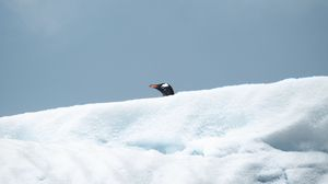 Preview wallpaper penguin, bird, snow, head, look out
