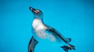 Preview wallpaper penguin, bird, swim, water, underwater world