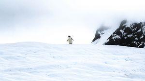 Preview wallpaper penguin, ice, snow, antarctica