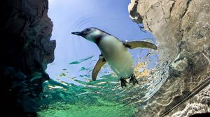 Preview wallpaper penguin, swim, water, rocks