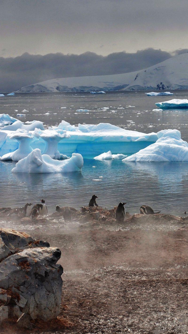800x1420 Wallpaper penguins, atmosphere, ice, water, house, fog