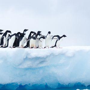 Preview wallpaper penguins, flock, ice, glacier, antarctica
