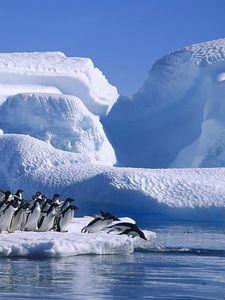 Preview wallpaper penguins, flock, jump, ice, snow, antarctica