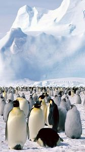 Preview wallpaper penguins, flock, north, snow, mountain