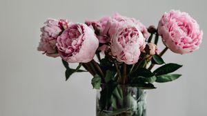 Preview wallpaper peonies, flowers, bouquet, pink, vase