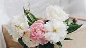 Preview wallpaper peonies, flowers, petals, bouquet, floristry, light