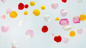 Preview wallpaper petals, colorful, macro, light