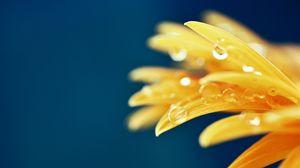 Preview wallpaper petals, drops, macro, flower, wet, yellow