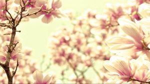 Preview wallpaper petals, flower, bright
