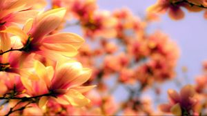 Preview wallpaper petals, plant, background