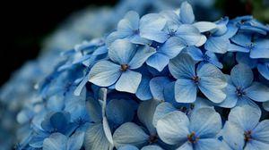 Preview wallpaper petals, plant, light, small