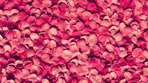 Preview wallpaper petals, rose, red, texture