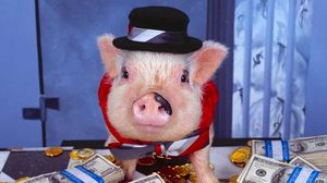 Preview wallpaper pig, costume, money, hat, gold