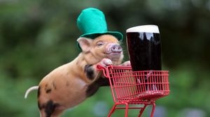 Preview wallpaper pig, drink, shopping, hat