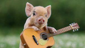 Preview wallpaper pig, little pig, guitar