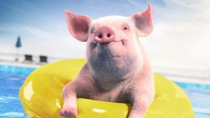 Preview wallpaper pig, rubber ring, funny, animal, pool