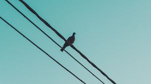 Preview wallpaper pigeon, wire, sky