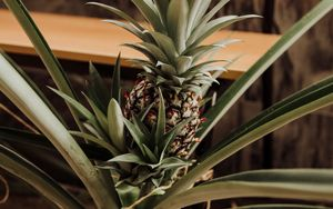 Preview wallpaper pineapple, fruit, leaves, palm
