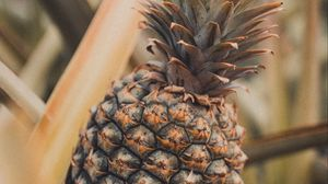 Preview wallpaper pineapple, fruit, tropical, plant, leaves