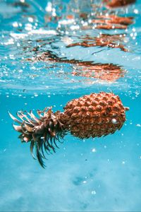 Preview wallpaper pineapple, fruit, tropical, water, bubbles