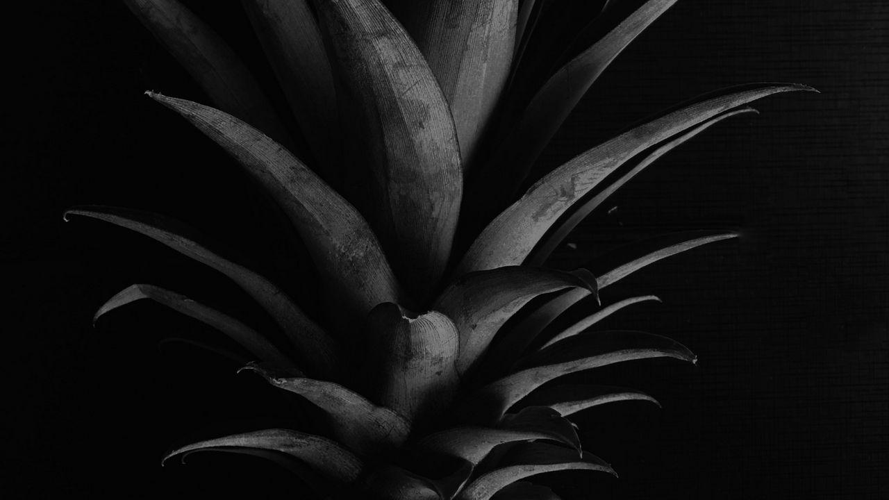 Wallpaper pineapple, leaves, bw