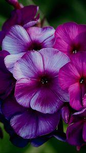 Preview wallpaper plant, flowers, petals, macro, purple