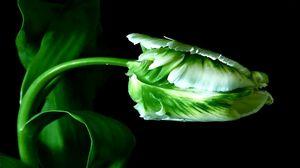 Preview wallpaper plant, green, stem