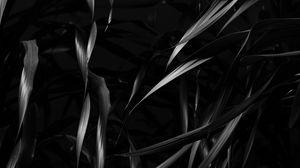 Preview wallpaper plant, leaves, black, bw